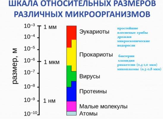 %d1%80%d0%b0%d0%b7%d0%bc%d0%b5%d1%80%d1%8b-%d0%bc%d0%b8%d0%ba%d1%80%d0%be%d0%be%d1%80%d0%b3%d0%b0%d0%bd%d0%b8%d0%b7%d0%bc%d0%be%d0%b2